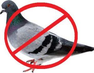 solutii impotriva porumbeilor